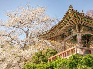 Teach in Korea